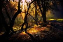 Inspirational Photography  / by Christina