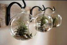 Air Plants, Succulents & Terrariums ...........