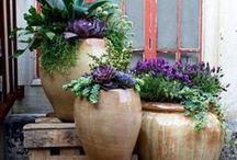 Le jardin en pot  .....