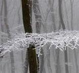 Fotowettbewerb: Jahreszeiten / Unser Jahr ist in vier Perioden gegliedert, die sich vor allem klimatisch unterscheiden – und jede Jahreszeit hat ihren eigenen Reiz: Die Frische des Frühlings, die langen Tage des Sommers, die Unbeständigkeit des Herbstes oder die dämmrige Stimmung des Winters bieten ganz besondere Motive für jeden Fotografen. Wir freuen uns auf deine spannendsten Aufnahmen aus den vier Jahreszeiten und vom Wandel dazwischen. https://contest.cewe-fotobuch.de/jahreszeiten-2016 (20.10.2016 – 20.10.2017)