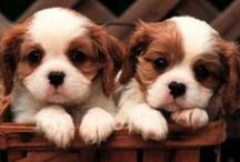 Cute Animals / #animals, #cute, pet