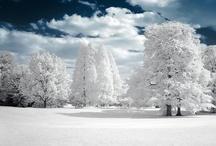 Winter / #winter #snow #snowing #white