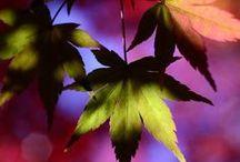 Autumn (My fav' season...) / #Autumn #fall  #leaves #leaf #pumpkin