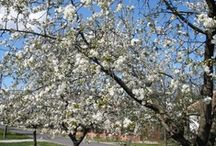 Spring  / #spring