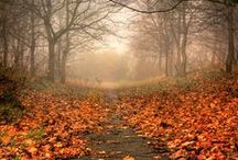 ~Autumn~ / soothes my soul... <3