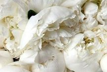 Flowers / by Emily Schmidt
