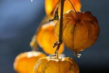 [ It's Autumn ] / Autumn moods * colors* taste …
