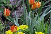 Plant Combos | collected by Klasse im Garten