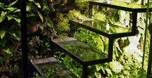 Extremstandorte fuer Pflanzen | collected by Klasse im Garten / tough conditions for plants