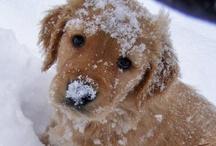 cute, cuddly, & adorable