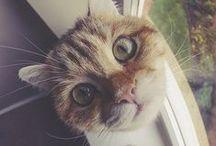 Animals - cat