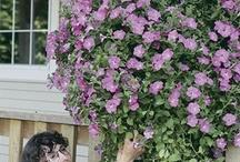 Flowers / by Tina Taylor-Kibodeaux