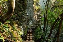 Pathways not Taken