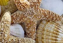 Shells & Beachy things!!