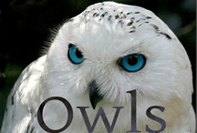 OWLS / by Trudy Tompkins Martinez