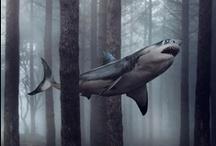 Animals - shark