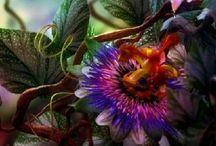 Flowers / by judy burkhart tokmakian