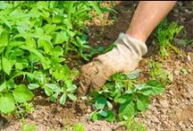 Go Outside! / Gardening, Curb appeal, Vegetables