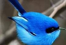 I Love Birds / by Karen Abbott