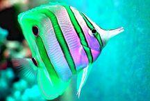 Su altı / Underwater World