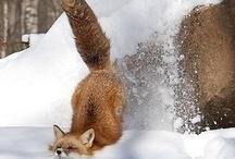 Fantastic Fox / by Akasha Fryman