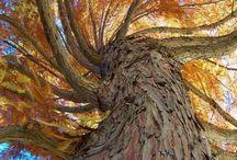 Trees / by Karen Abbott