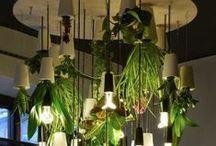 Verde / Plantas, hortas para apartamento, jardins, ervas