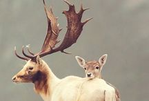 Nature. Animals. Perfection. / Infinite perfection displayed in nature