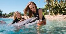 Discovery Cove Vacation Planning Tips / Learn tips and tricks for planning your Discovery Cove vacation, located at SeaWorld Orlando.