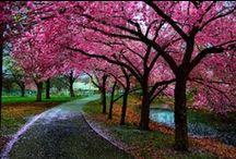 Trees / by Jaime Evans