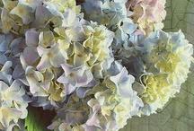my flowers / GOD  smiles in flowers
