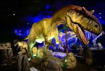 Dinos! / by Witte Museum