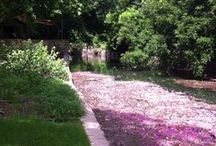 Our Amazing San Antonio River / by Witte Museum