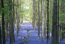 Bluebell / a pallet of clear sky, fresh pastels and a glade of bluebells Don't forget to state your Choice when ordering bags and soft furnishing.