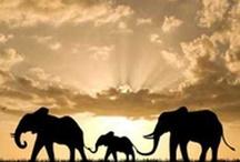 Incredible Elephants