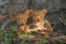 Cute baby animals at Kruger National Park