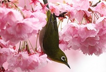 Garden delights / Natural inspiration