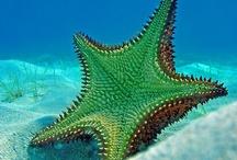 Ocean creatures - Amazing