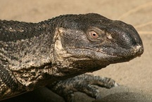 Reptiles of the Kruger Park