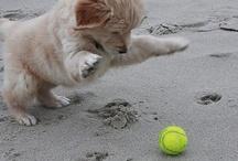 Puppies / by Allison Turner