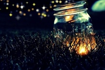 Fireflys and glow worms