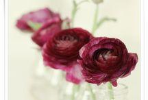 Sumptuous burgundy