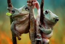 Frogs / Frogs