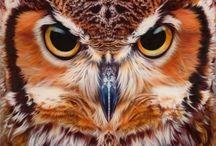 Owls / by Lea Bech-Sjøthun
