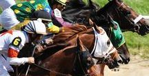Kentucky Derby / Just an hour away from Schenck Mansion is the famous Kentucky Derby!