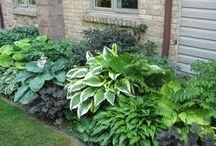 garden shade plants / by Lila Wickham