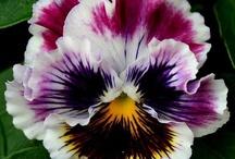 paint acry flowers / by Lila Wickham