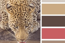 paint color chips#1 / by Lila Wickham