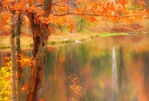 paint acry autumn / by Lila Wickham