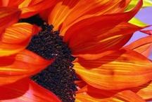 paint acry flow. sunflower / by Lila Wickham